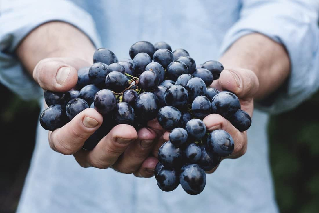 Piedmont wine, Piedmont Wine Region, Piedmont wine region Italy, Italy Piedmont wine, piedmont italy wines, wine tasting in italy, wine tourism in italy, italy wine vacation, wine and food tours in Italy